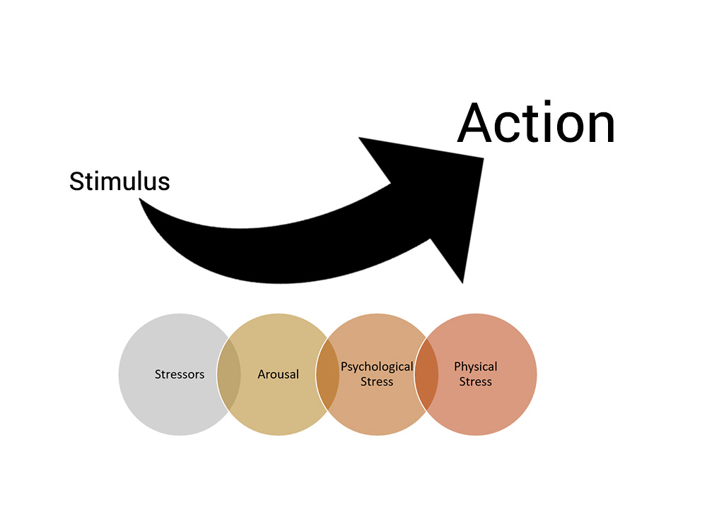 The four steps that lead from stimulus to action